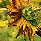 Morning Sunflower by moor2sea
