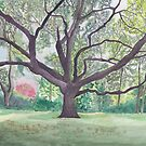 A big oak by acquart