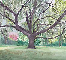 A big oak by acquart