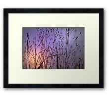 *Evening Sun* Framed Print
