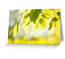 Young Elm leaves on blurred green  Greeting Card