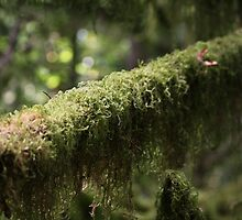 moss by taracallaghan