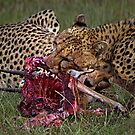 Cheetah&#x27;s Meal by Henry Jager