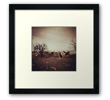lonely autumn Framed Print