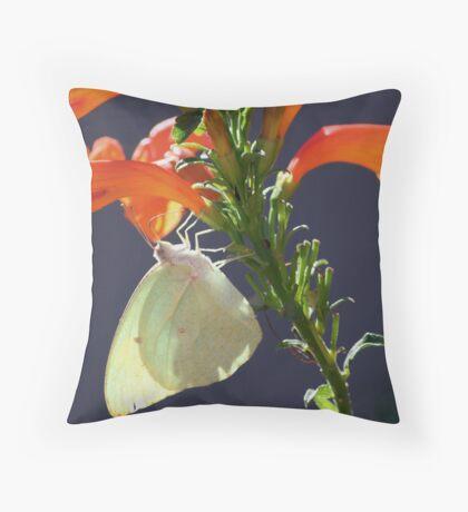 Afrikaanse swerwer - Catopsilia florella - African Migrant Throw Pillow