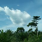 Clouds over the rain forest. . .  by Baba John Goodwin