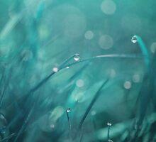 morning droplets by Priska Wettstein
