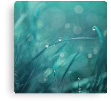 morning droplets Canvas Print