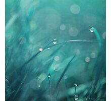 morning droplets Photographic Print