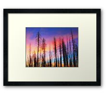 Whispering Pines Framed Print