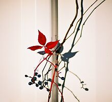 Berries & Red Leaves on a Fence - Fremantle, WA by Sandra Albin