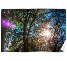 The Light in the Trees Poster