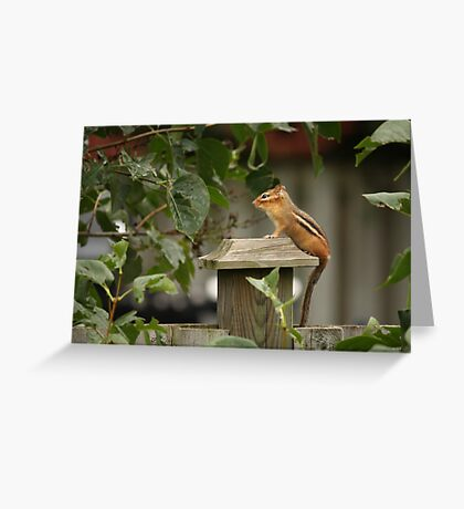 Peaceful Pose Greeting Card