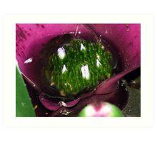 Bromeliad - Little Pond Art Print