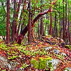 Gulf Island Woods in the Fall by toby snelgrove  IPA