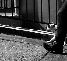 justa walkin' the mog. by geof