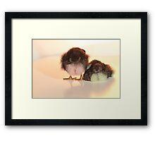 Coloured Chicks Framed Print