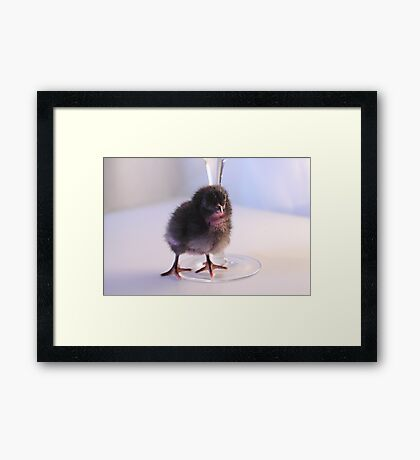 Coloured Chick Framed Print
