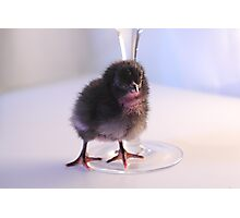 Coloured Chick Photographic Print