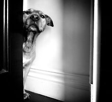 Nash at Door by d4dogphoto