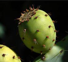 Prickly Pear by Robert Bertino