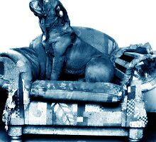 Blue Couch by d4dogphoto