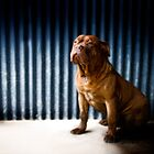Mercury Blue Wall by d4dogphoto