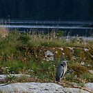 Great Blue Heron and the West Coast View by Keanna