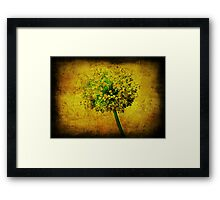 Allium. Framed Print