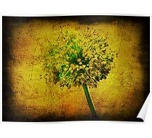 Allium. Poster