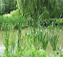 Some reeds along the water.... by Stille-Waters