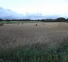 Countryside: Kingswood, Surrey -(260811j)- digital photo by paulramnora
