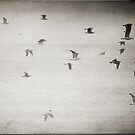 Flight by Nicola Smith