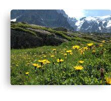 Mountain flowers 1 Canvas Print