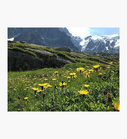 Mountain flowers 1 Photographic Print
