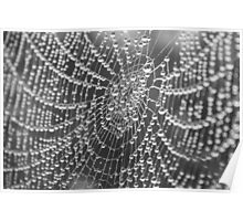 Spider Web in Dew Poster
