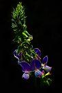Fractal Lilac Shining by Atılım GÜLŞEN