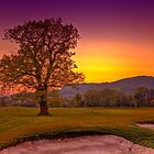 Sunset Oak  at the golf course by Delfino