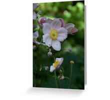 Flower 37 Greeting Card
