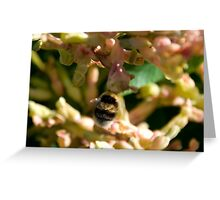 Bumble Bee 4 Greeting Card