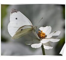 White With A Touch Of Orange Poster