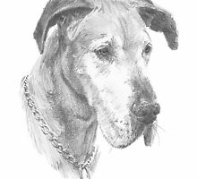 great dane drawing by Mike Theuer