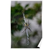 Black and Yellow Orb weaver Poster
