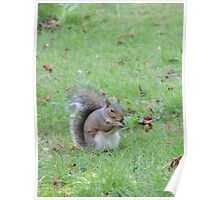 Happy Squirrel 2 Poster