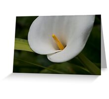 Lily 11 Greeting Card