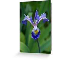 Flower 47 Greeting Card