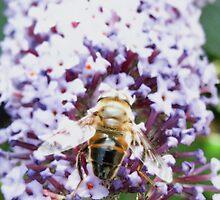 Last of the 2011 Summer Bumble Bees by Vanessa  Warren