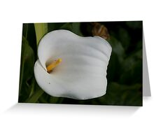 Lily 12 Greeting Card