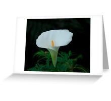 Lily 15 Greeting Card