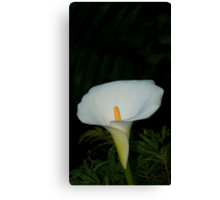 Lily 16 Canvas Print